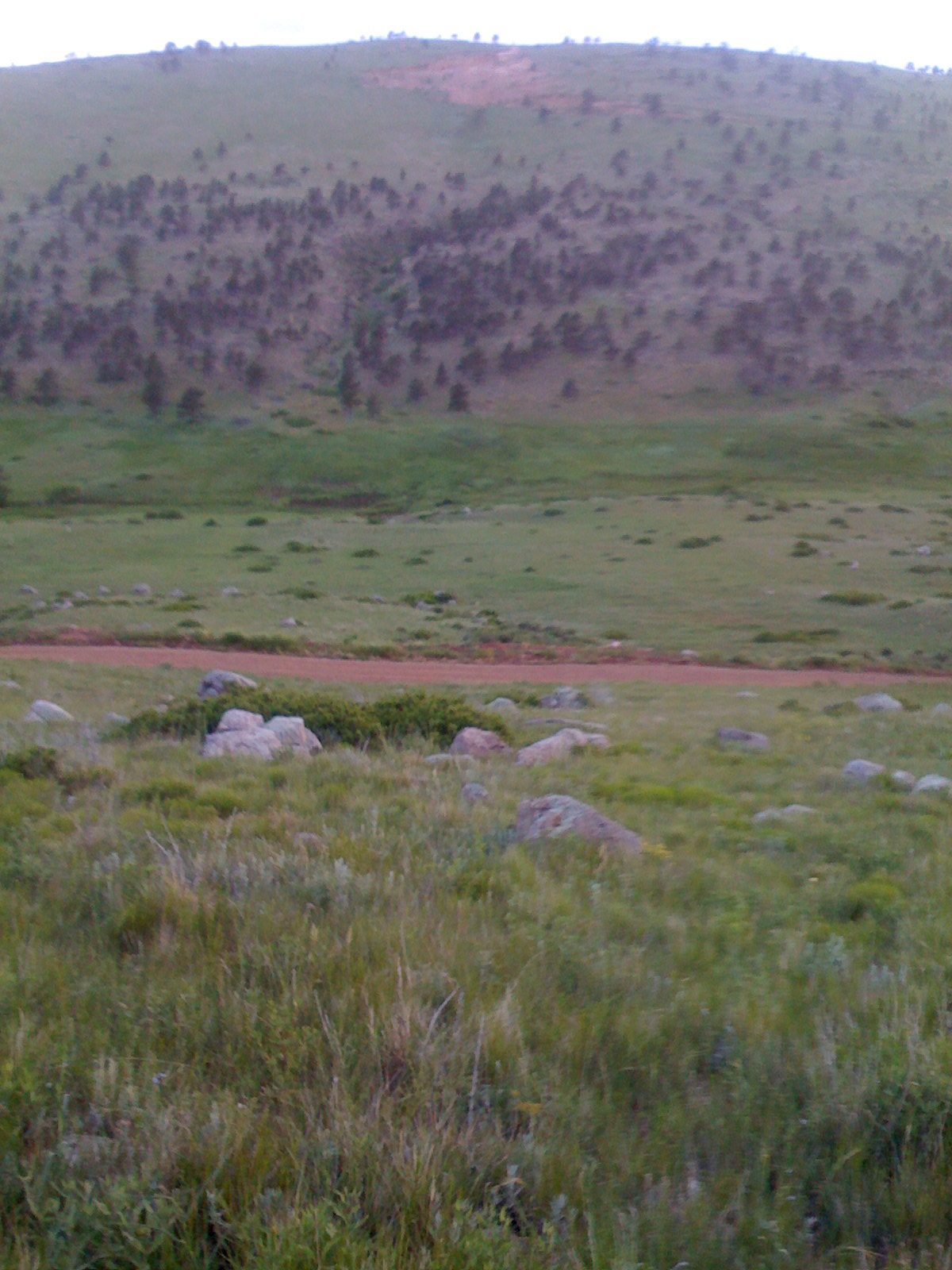 Is this pretty or what?  Looking down into the Meadow Hollow Creek valley at Mountain Sky Ranch in early June, 2010.